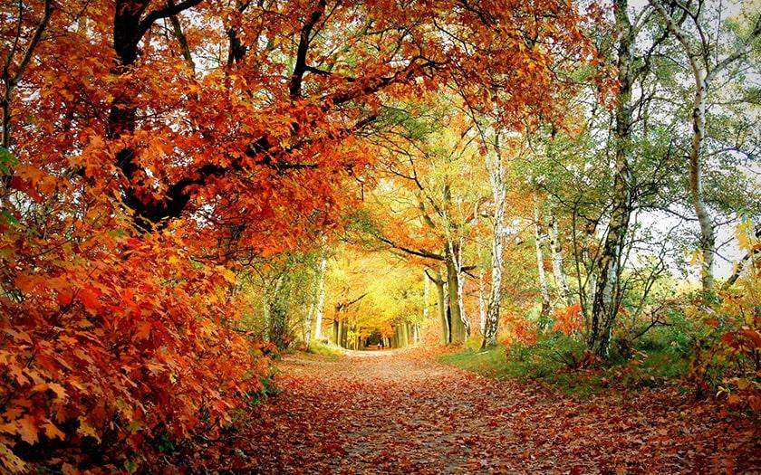 Hình nền máy tính thiên nhiên, cảnh rừng