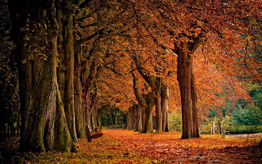 Hình nền máy tính thiên nhiên mùa thu