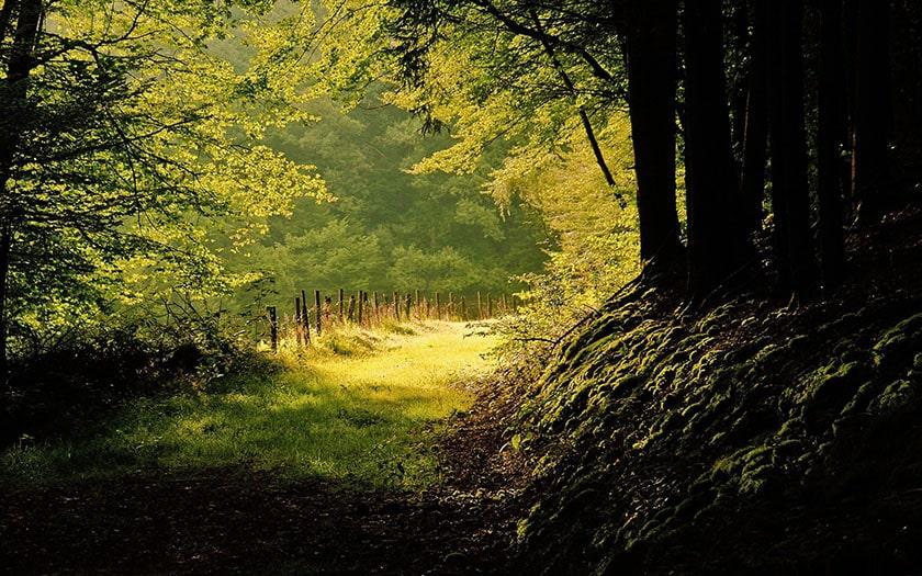 hình nền thiên nhiên cho máy tính: cảnh rừng