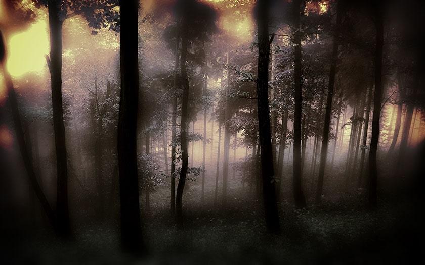 hình nền thiên nhiên cho máy tính: cảnh rừng sương